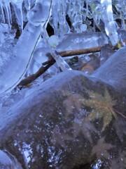 秋を氷りづけ