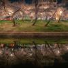 SAKURA Reflection #1