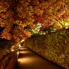 談山神社 #9