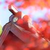 秋を切り取る #7