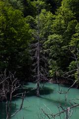 枯れ木と緑木