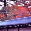 御所の秋 楓