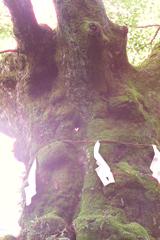 ハ-トの御神木