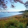 秋晴れの湖岸