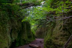 苔の回廊2
