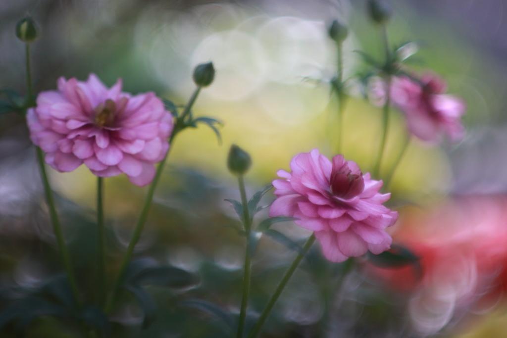 春への誘い(いざない)