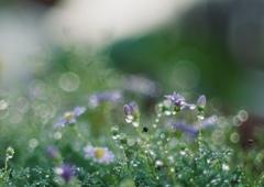 朝の庭で深呼吸