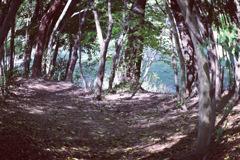 森の朝の光を!