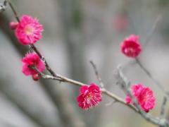 春を待つ風