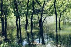 水辺の森へ
