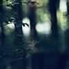 朝の森は 元気になれる場所