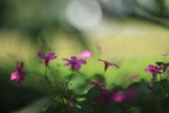 野の花の色