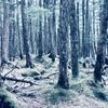白駒の森を歩いた