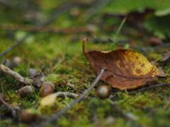 森も秋いろ