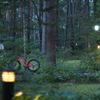 森の中に佇む