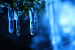 藻に張り付く小さな氷柱