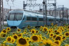 小田急線ロマンスカーと向日葵の花3