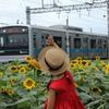 向日葵と少女 3