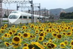 I小田急線ロマンスカーと向日葵の花2