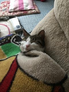 毛布掛けてねてます。(*´▽`*)