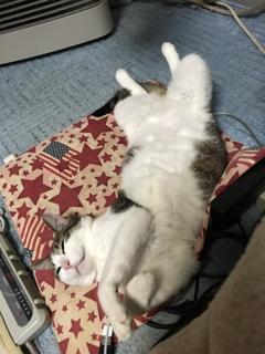 凄い格好で寝てますね(´∀`*)