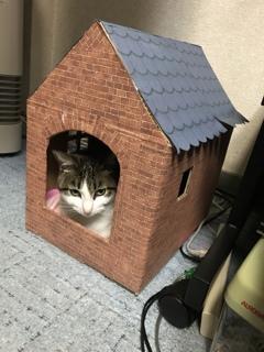 猫小屋作ってみました✌︎( ˙-˙ )✌︎