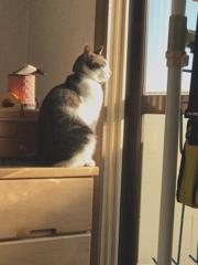 朝日を浴びてるメル