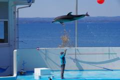 のとじま水族館 カマイルカのショー9 ナイスジャンプ2