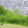 つつじを観に散歩 (35)