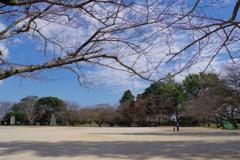 大分ちょっと旅行 臼杵城跡 今では公園になっているようです。