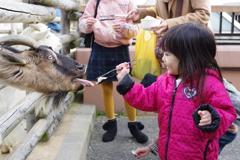 正月 姪 動物園にて 嬉しそうに餌をあげる