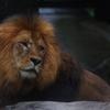 雨のいしかわ動物園 寂しげな表情