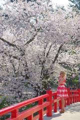 弘前さくら祭り 赤い橋で号泣する赤い服を着た金髪の女性とピンクのさくら