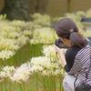 香林寺 彼岸花とカメラマン