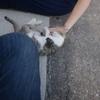 長崎 池島観光 バスの時間まで猫と戯れる