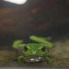 雨のいしかわ動物園 可愛いカエル