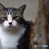 鎌倉散歩 野良猫  Fujinon 135mm f3.5