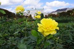 ウィーン ホーフブルク宮殿 庭園 薔薇
