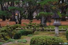雨に濡れる晩秋の兼六園 (23)