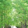 西洋館巡り argus 55mm f1.7 新緑