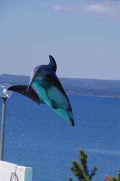 のとじま水族館 カマイルカのショー10 いい角度