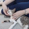 長崎 池島観光 バスの時間まで猫と戯れる マッサージ