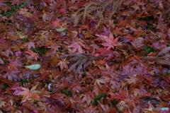 雨に濡れる晩秋の兼六園 (29)