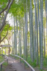 Kamakura散歩 英勝寺 竹林 ふんわりと撮ってみた