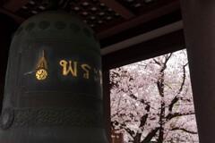 覚王山 日泰寺 鐘と桜