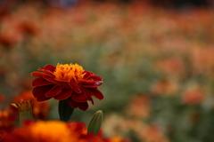 デンパーク 花①