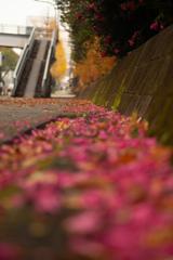 歩道橋を見上げる ピンク