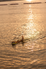 朝日の中 泳ぐ犬
