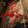 紅葉 on the road.