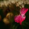 紫陽花 ㊱ 現実